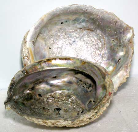 Abalone Shell incense burner